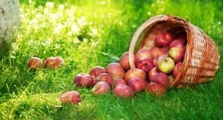 La pomme comme coupe-faim