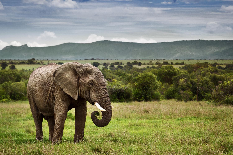 Safarivo.com, le guide vers la liberté